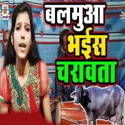 Listen to Balmua Bhais Charawata songs from Balmua Bhais Charawata